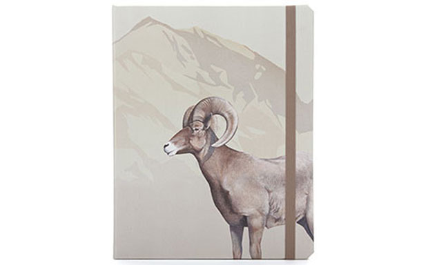 Dodocase Bighorn Sheep review